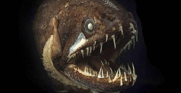 У�ен�е на�ли загадо�н�й гиган��кий океан � оби�а�елями
